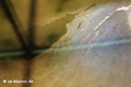Belag auf der Wasseroberfläche - Kahmhaut, UVC-Klaerer