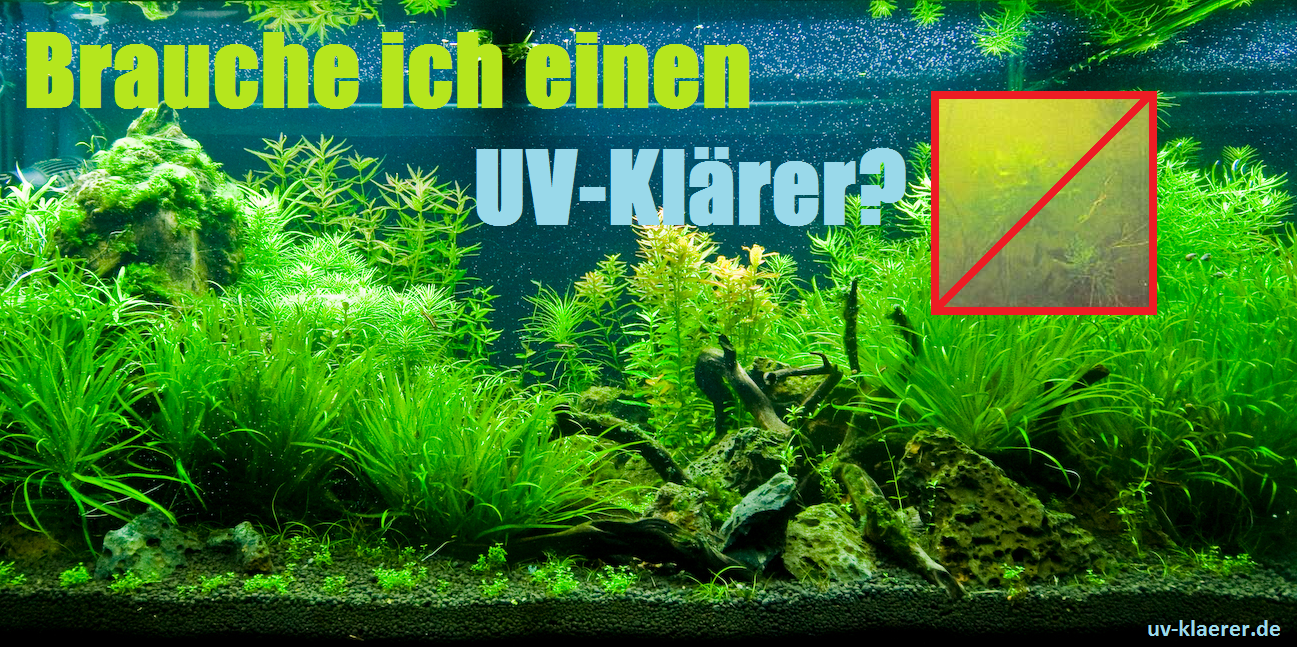 Swimming pool uvc kl rer klares und keimfreies wasser for Algen im aquarium