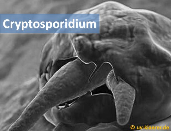 cryptosporidium_keime_im_wasser_uvc_mikroorganismen