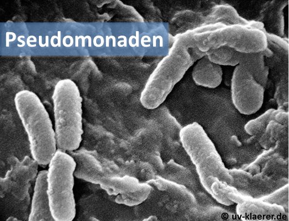pseudomonaden_keime_im_wasser_uvc_mikroorganismen
