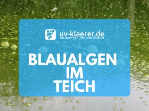 Blaualgen im Teich UVC Klärer klares Wasser im Teich