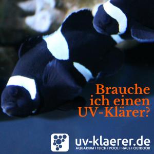 UV Filter im Meerwasseraquarium