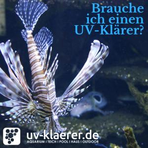 UV Klärer im Meerwasseraquarium