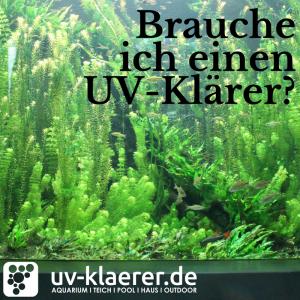 UV Klärer im Süsswasseraquarium