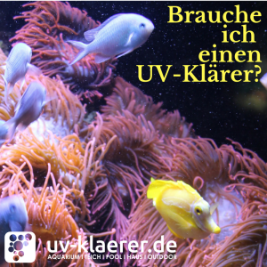UV Wasserklärer im Meerwasseraquarium