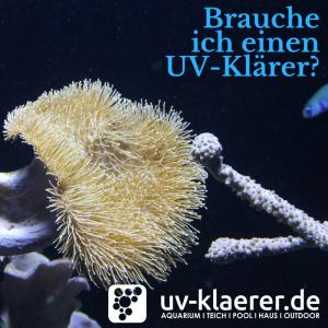 UVC Filter im Meerwasseraquarium