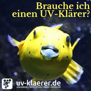 UVC Klärer im Meerwasseraquarium