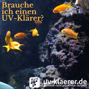 UVC Wasserklärer im Meerwasseraquarium